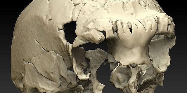 Schädel von Aroeira