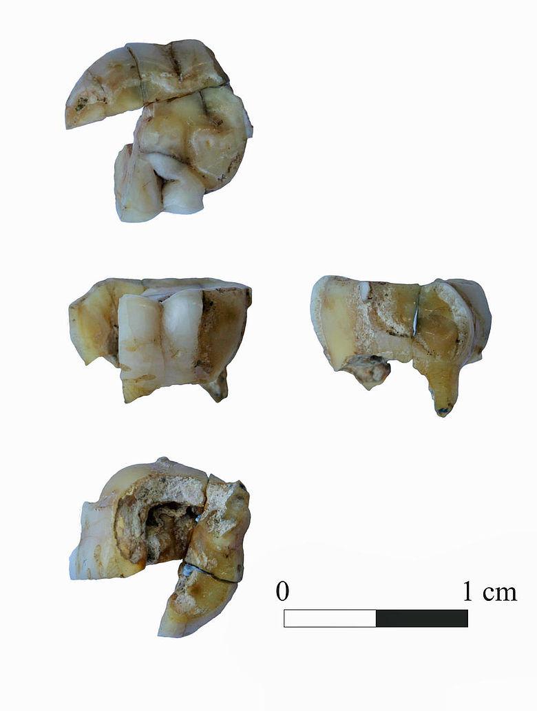 Fragmente eines etwa 14.000 Jahre alten Zahns von Individuum UKY001