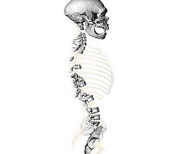 Virtuelle Rekonstruktion der Wirbelsäule des Skeletts von La Chapelle-aux-Saints