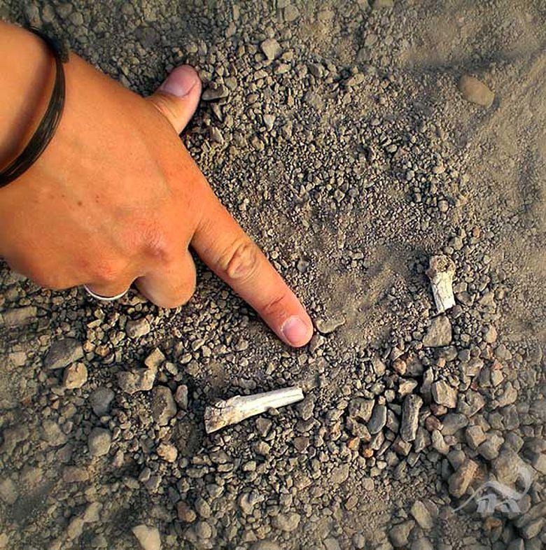 Mittelfußknochen einer noch unbekannten Hominidenart