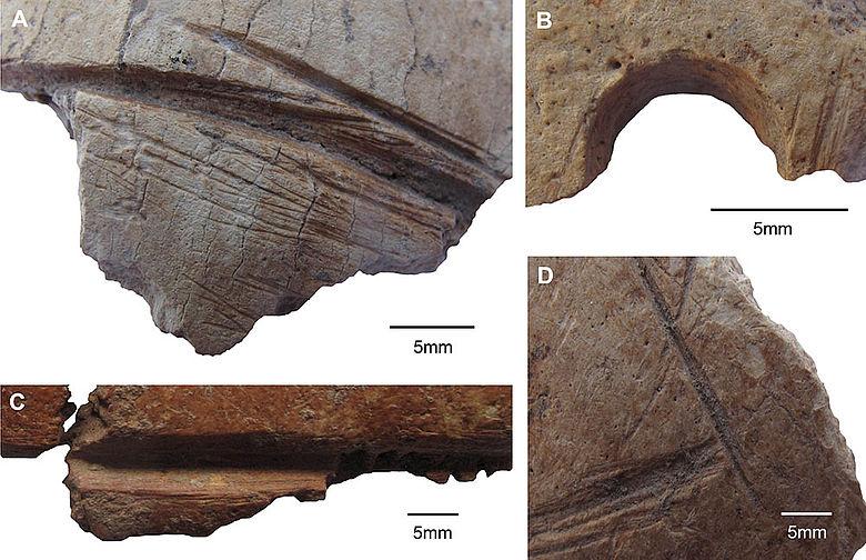 Detailfotos der Schädelmodifikationen vom Göbekli Tepe