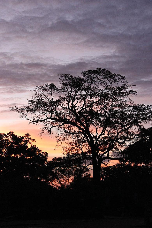 Tropischer Wald nahe der antiken Stadt Polonnaurwa auf Sri Lanka