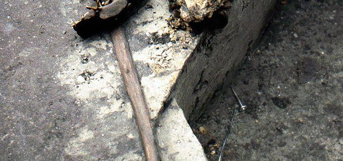 300.000 Jahre alter Holzspeer
