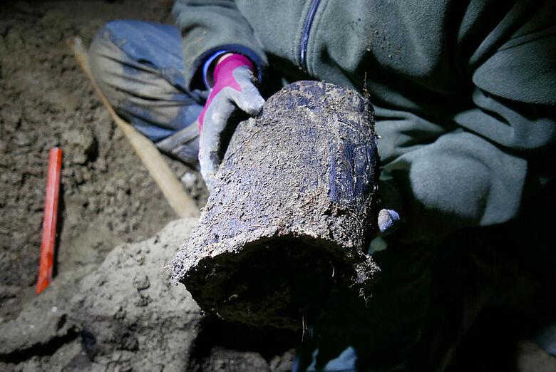 13.000 Jahre alter Baumstamm