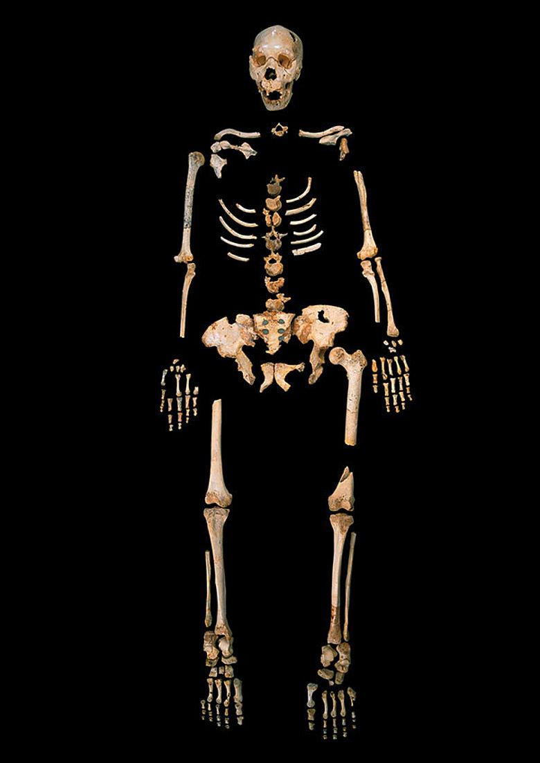 Homo heidelbergensis Skelett