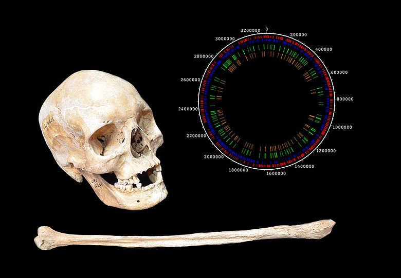 Mittelalterliche Knochen einer Leprakranken, Lepra-Genom