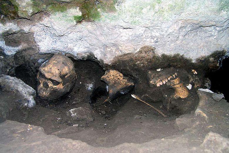 Früher «Homo»-Schädel und Überreste fossiler Pflanzenfresser am originalen Fundort in Dmanisi (Bild: Nationalmuseum Georgien)