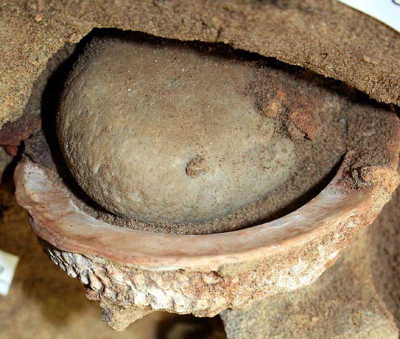 Das »Malset« nach der Freilegung. Der Inhalt der Abalone-Schale wird durch einen flachen Kieselstein bedeckt © d'Errico/Pedersen/Henshilwood