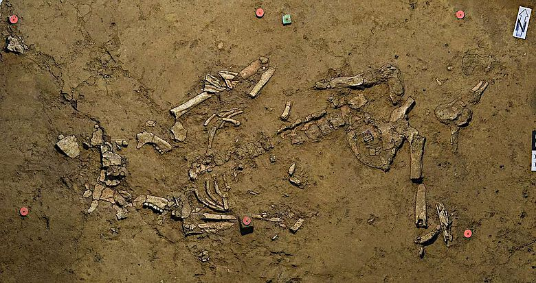 Frühbronzezeitliche Frauenbestattung in Fundlage. Der grüne Messnagel oben markiert in etwa die Fundlage der Goldspirale
