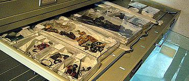 Ein Blick in die neugeordneten Schubladen im Magazin des Alamannenmuseums.