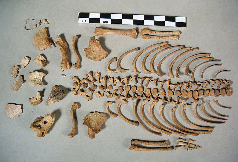 Skelett eines perinatalen Säuglings