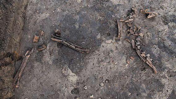 Knochenreste eines Rothirsches an einem Lagerplatz der späten Altsteinzeit