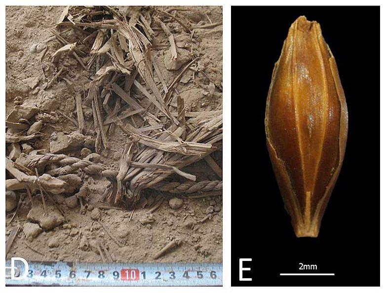 Getreidefund