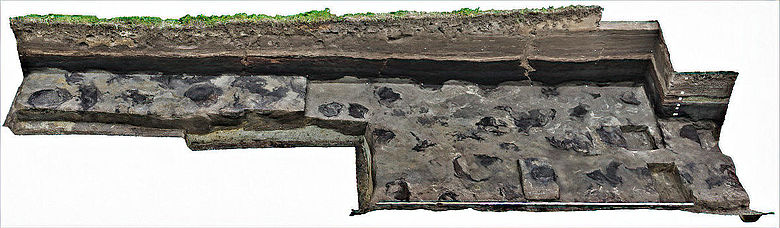 Fußabdrücke einer Elefantenherde im archäologischen Befund