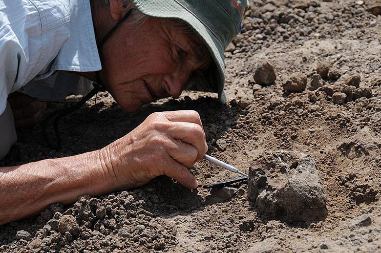Meave Leakey bei der Freilegung des Fossils KMN-ER 62000