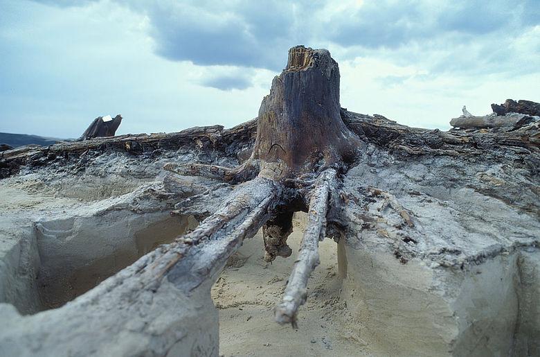 Kieferstumpf aus der späten Eiszeit