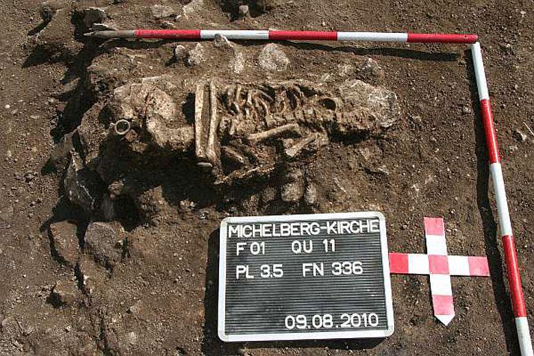 Freigelegtes Skelett (Foto: Urgeschichtemuseum NÖ)