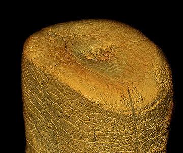 Neandertaler-Zahn (Kaufläche)