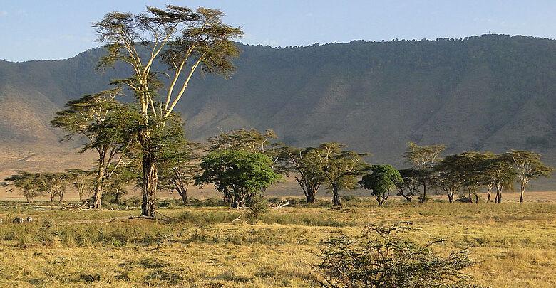 Der Ngorongoro am Rande der Serengeti in Tansania ist Heimat einer vielfältigen Tierwelt