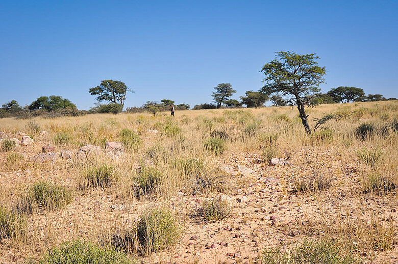 Südliche Kalahari