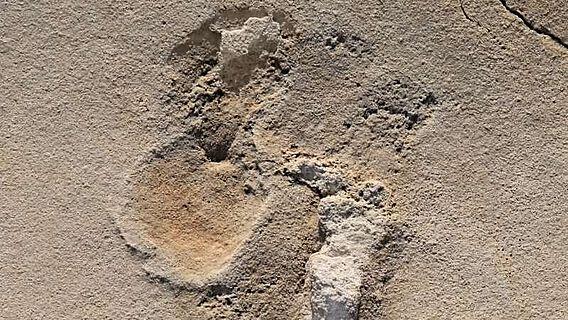 Eine von über 50 Fußspuren früher Menschenvorläufer, welche 2017 bei Trachilos auf Kreta beschrieben wurde
