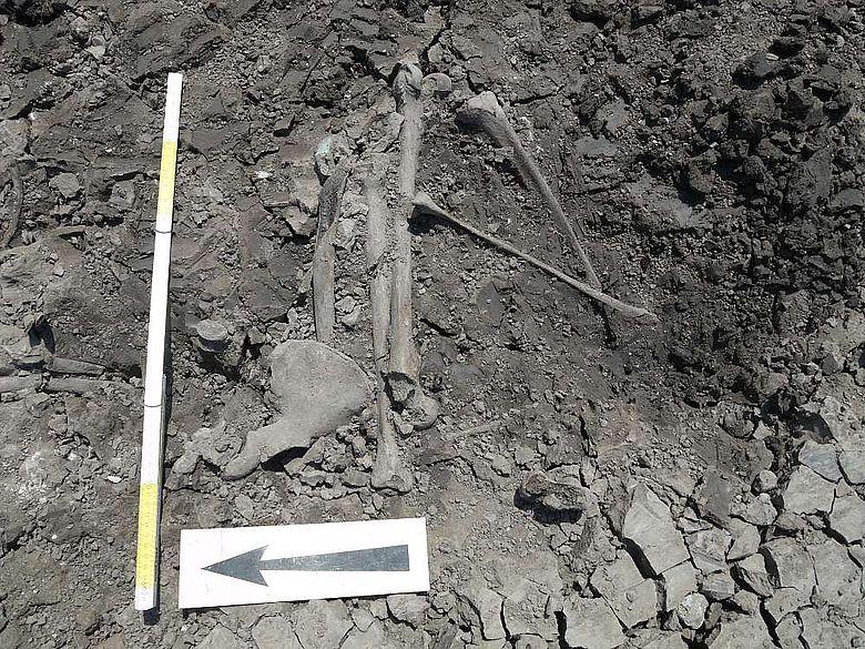 Das bronzezeitliche Skelett in Fundlage