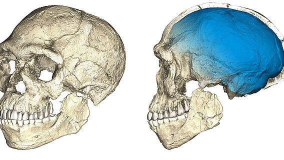Schädel-Rekonstruktion der frühesten Homo spaiens-Fossilien