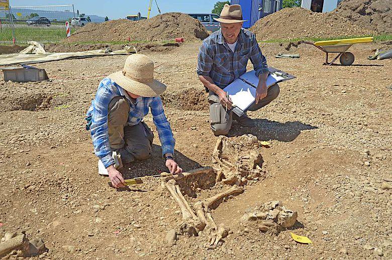 Eines der Skelette, die im Bereich der Richtstsätte gefunden wurden