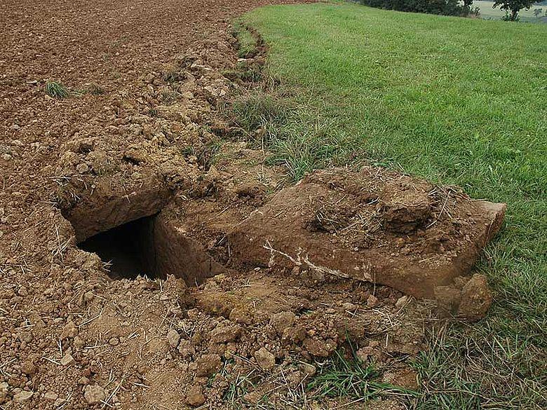 Beim Pflügen löste sich eine Steinplatte unter dem Ackerboden - zum Vorschein kam ein seit 130 Jahren unberührtes Grab eines Frankenfürsten. (Naturzentrum Eifel, Nettersheim / I. Ristow)