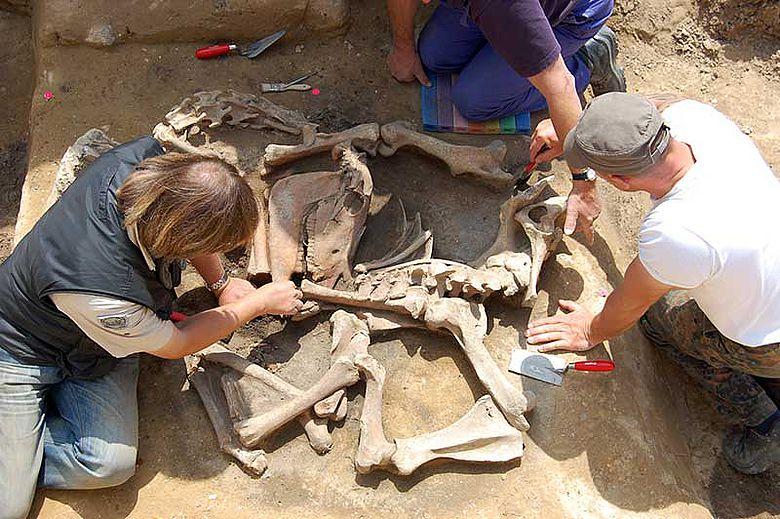 Ausgrabung Pferdeskelett