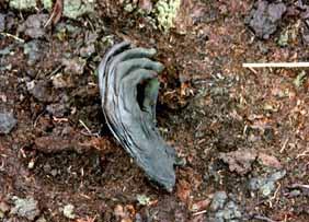 Die im Januar 2005 gefundene Hand der Moorleiche. (Foto: Niedersächsisches Landesamt für Denkmalpflege)