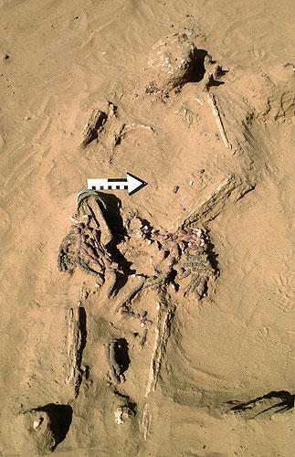 Eine besonders reich ausgestattes Grab in der für die Bestattungen typischen Skelettlage (Foto: S. Magnavita)