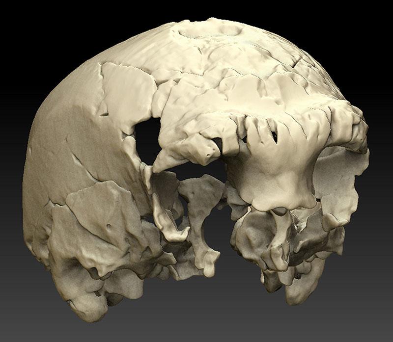 Neu entdeckter menschlicher Schädel aus Portugal ist 400.000 Jahre ...