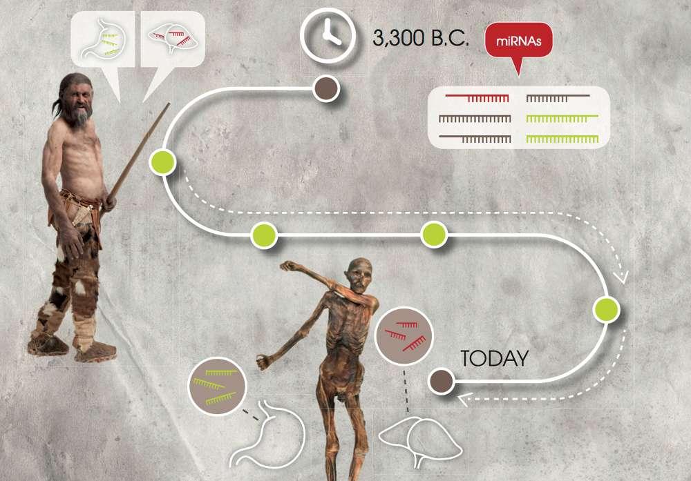 Forscher können kurze Ribonukleinsäure-Moleküle sogar in Mumien wie dem Ötzi nachweisen