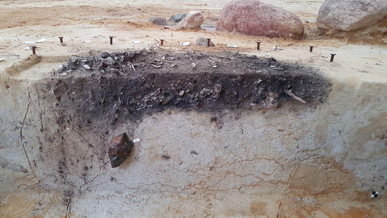 Jungbronzezeitliche Bestattung (Grabungsprofil)