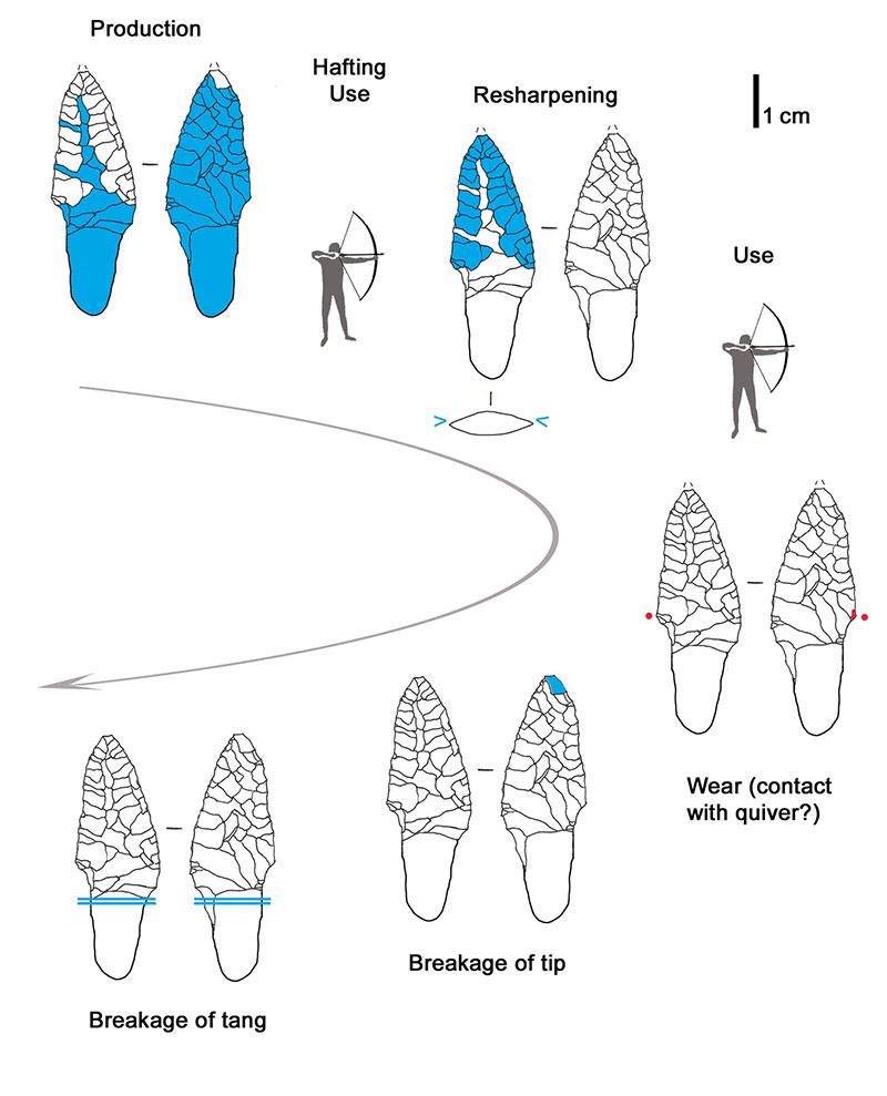 Nutzungsverlauf einer Silex-Pfeilspitze von Ötzi