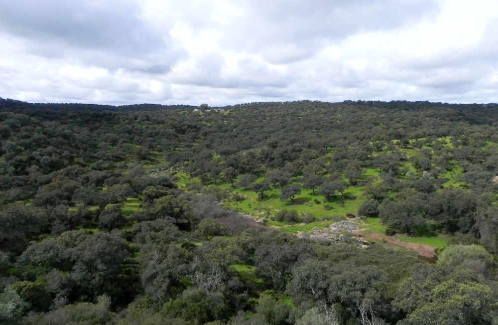 Dehesa-Landschaft