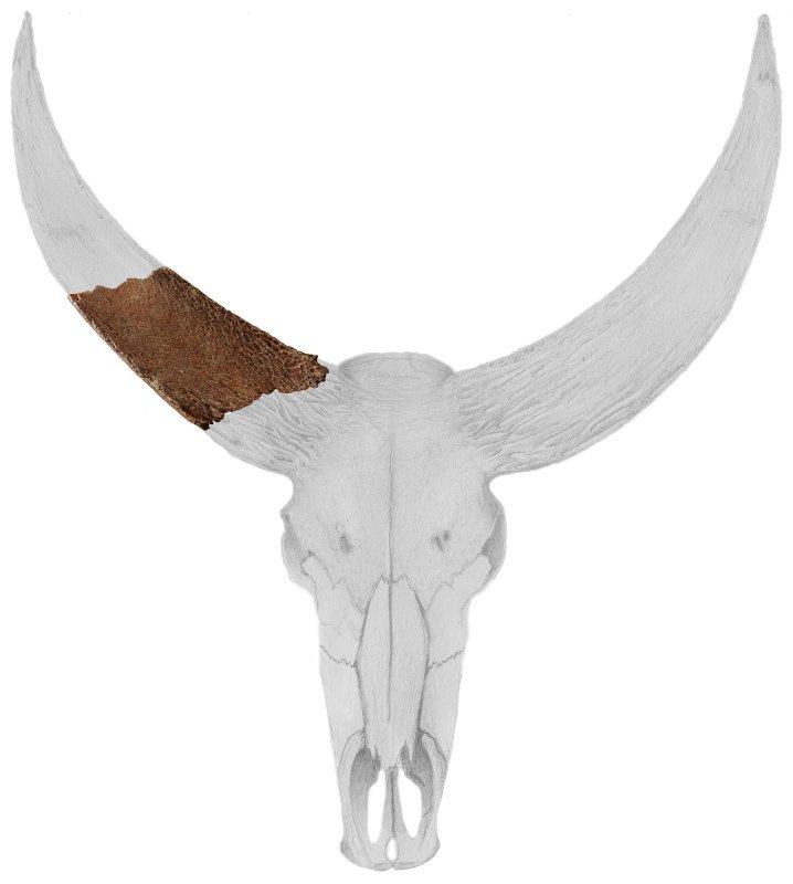 Das etwa 400.000 Jahre alte Horn-Fragment aus Frankreich gehört zu einem Wasserbüffel