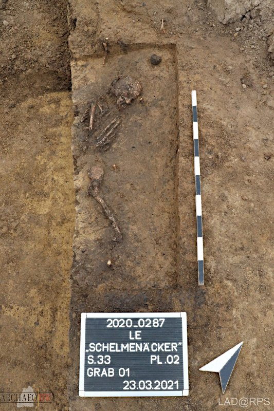 Freigelegtes Skelett der jungsteinzeitlichen Siedlungsbestattung