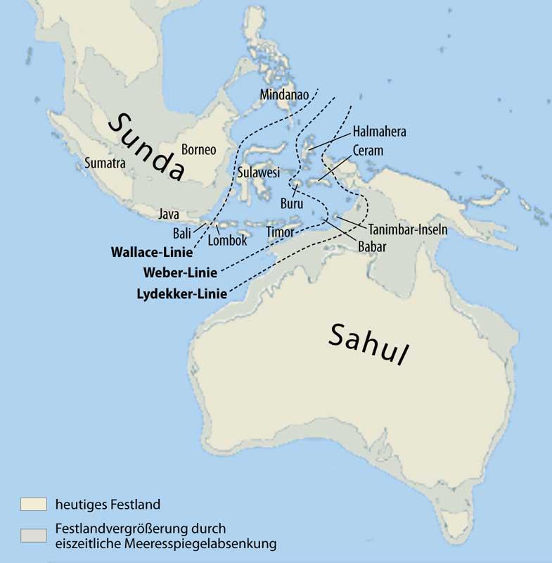 Als Sahul wird die zusammenhängende Landmasse bezeichnet, die während der letzten Eiszeit aus Australien, der nordöstlich davon gelegenen Insel Neuguinea und der südöstlich gelegenen Insel Tasmanien bestand. Sunda bestand aus den heutigen Inseln Borneo, Sumatra, Java, Palawan und weiteren kleineren Inseln Südostasiens sowie Hinterindien und war Teil des asiatischen Kontinents. Die Wallace-Linie, die Lydekker-Linie und die Weber-Linie sind biogeografische Trennlinien zwischen asiatischer und australischer Flora und Fauna.
