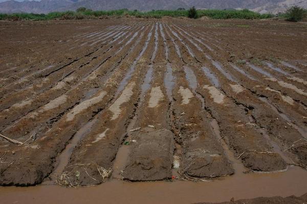 Die Bewässerung mit sedimentbefrachtetem Flusswasser ließ mächtige Terrassen entstehen
