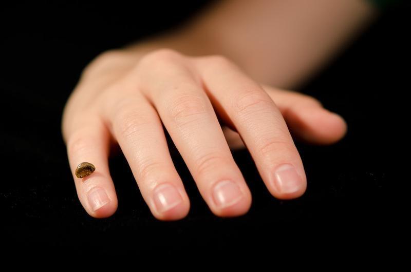 Replik des Fingerknochenfragments eines Denisova-Menschen auf einer menschlichen Hand. (© MPI für evolutionäre Anthropologie)