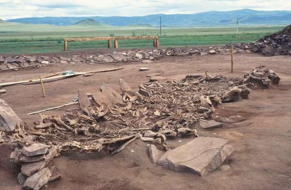 Pferdeskelette aus dem 7.Jh. v.Chr. gefunden in Tuva, Westsibirien (Copyright: DAI, M. Hochmuth)