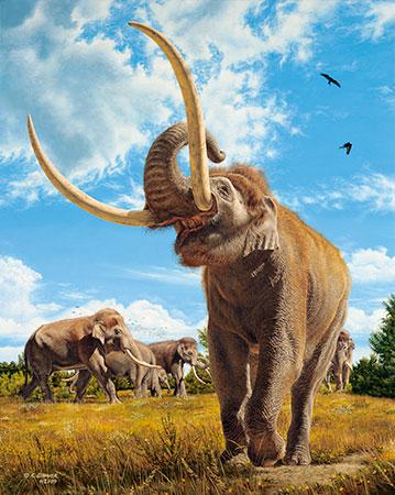 elephas antiquus