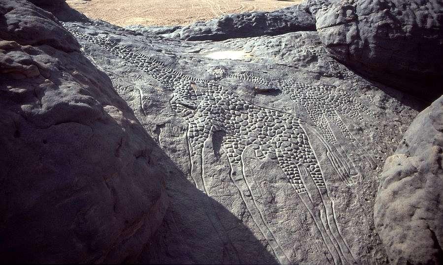 Lebensgroße Felsgravur zweier Giraffen aus Dabous, Niger