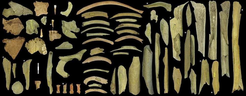 Knochenfragmente aus der Höhle von Goyet