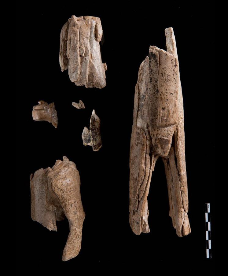 Fragmente des Löwenmenschen
