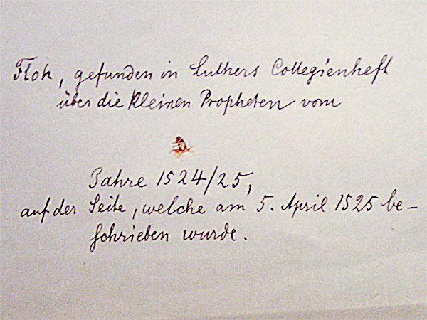 Floh aus Luther-Manuskript