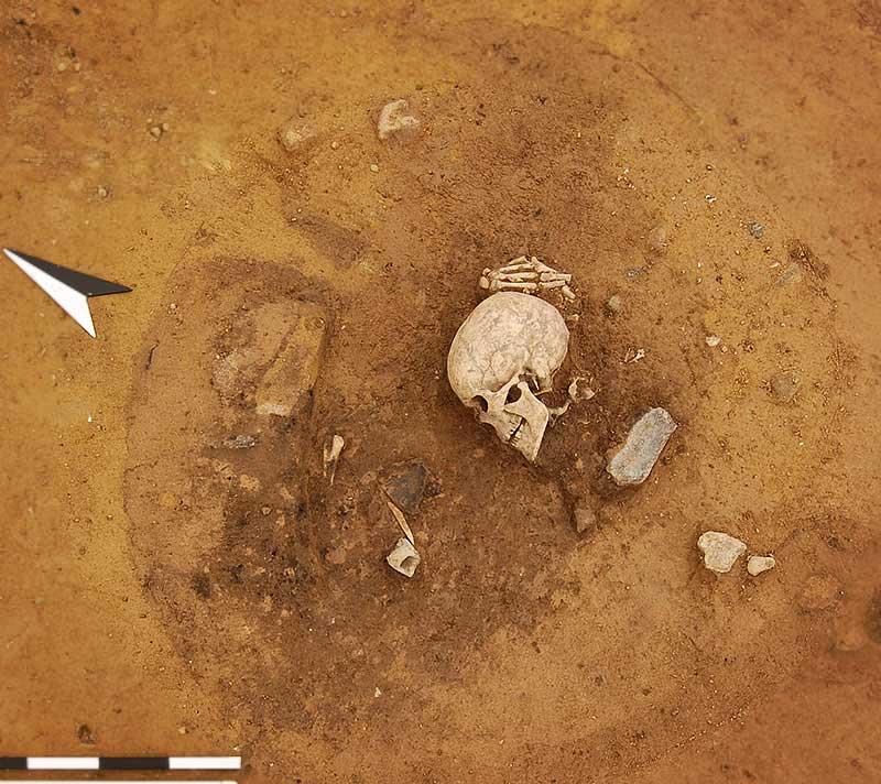 Schädel und Hand in situ