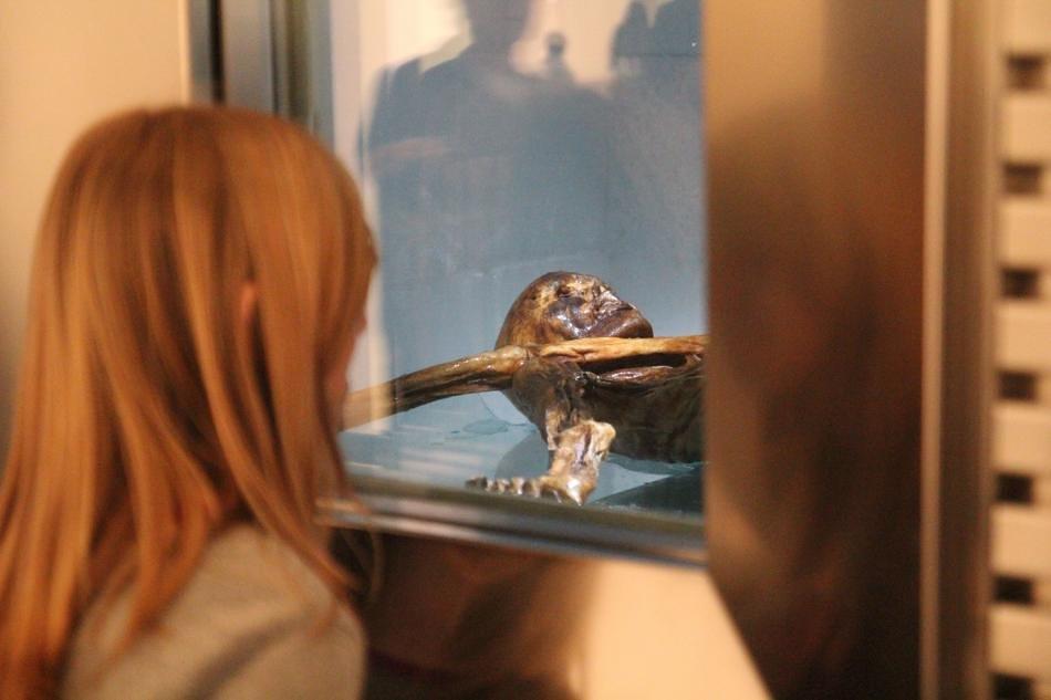 """Der """"Ötzi"""" bleibt natürlich die zentrale Sehenswürdigkeit des Museums in Bozen (© Südtiroler Archäologiemuseum)"""